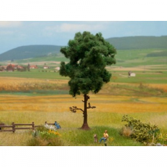 Noch 21911, Pine Tree
